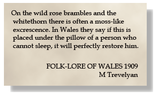 Wild Rose Folklore